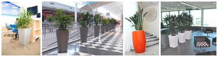 Indoor plant hire - Sunshine Coast